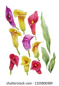 Floral watercolor Calla set on white background