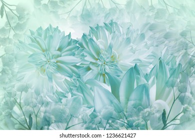 Floral white-turquoise background. Dahlias flowers close-up on a white-turquoise background. Petals of flowers. Greeting card. Nature.