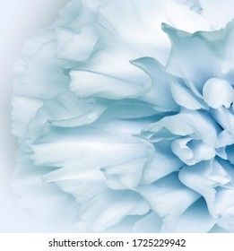 Floral white-turquoise background..  Flower petals close-up. Nature.