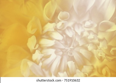 Floral  yellow-white background. Background of a dahlia flower close-up. Macro. Nature.