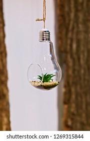 Florarium. Close-up of a mini succulent arrangement in a light bulb hanging on a rope.