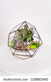 Florarium - composition of succulents, stone, sand and glass, element of interior,  home decor, table decor