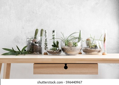 Florarium in glass vases with succulents on wooden table