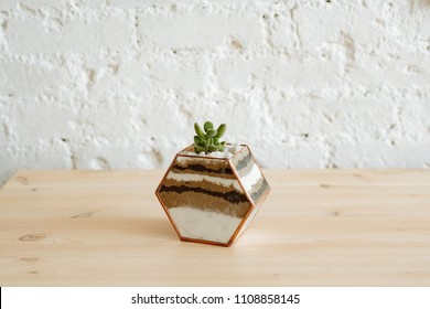 Florarium with live plants on a wooden table against a white wall.