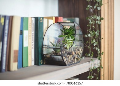 florarium with plants succulents stands on a bookshelf