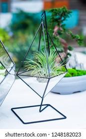 Florarium, succulent, with white sand, (terrarium for plants.)