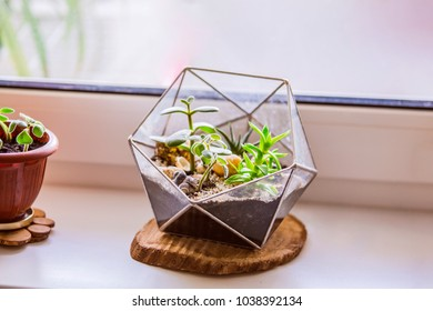 Florarium with succulents. Fashionable geometric glass pot for cacti.