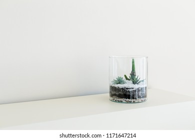 Florarium with succulents in glass vaze, copy space