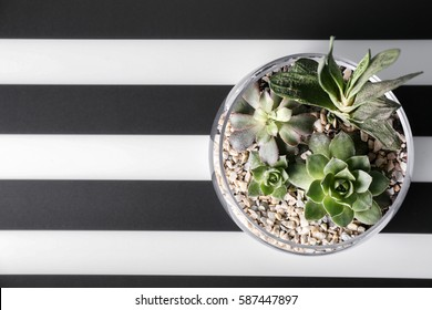Florarium with succulents on striped background, top view