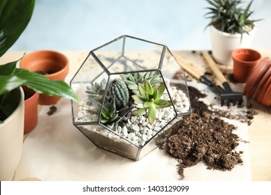 Florarium with succulents on table. Transplanting home plants