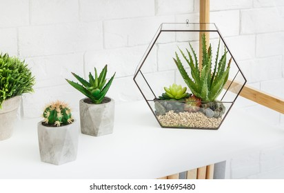 Florarium vase with succulent plants and cactuses in concrete pots on rack at white brick wall background.