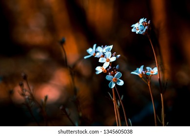 Flore in forest