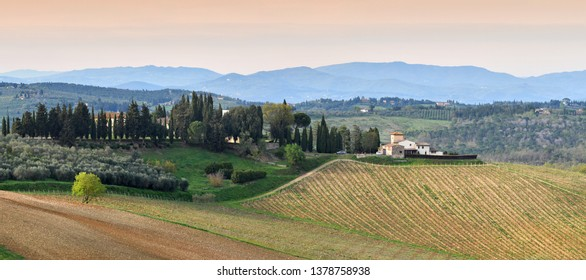 Florence, April 2019: Tuscany landscape  with hills and young green vineyards near Mercatale Val di Pesa (Florence) in spring season. Tuscany, Italy.