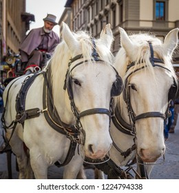 FLORENCE, ITALY - CIRCA FEBRUARY 2017: Bearded, nineteenth century coachman and his horses in Republic Square, Florence