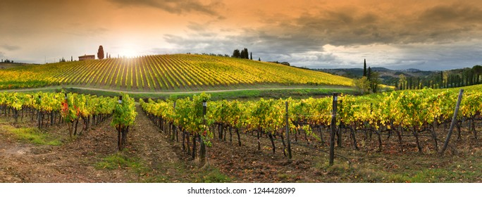 Florence, (Italy) November 2018: Beautiful yellow vineyards in Chianti region near Quarate village (Florence) during the colored autumnal season in Tuscany, Italy.