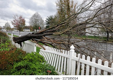 FLORENCE, NJ - OCT 30: An uprooted tree crashes into a yard and damages a fence during Hurricane Sandy in Florence, NJ on Oct 30, 2012