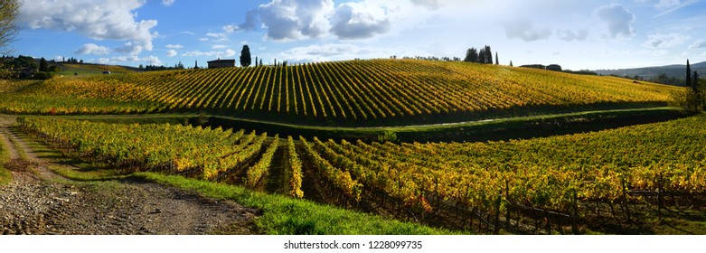 Florence, November 2018: Beautiful panoramic view of yellow vineyards in Chianti region near Quarate village, (Florence). Tuscany, Italy.