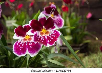 Flores, Orquideas, jardines de latinoamerica en el tropico de Colombia ciudad de medellin, antioquia sector andino en primavera
