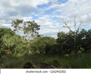 florest clouds woods