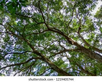 Florest in day