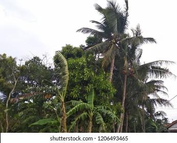 florest at java indonesia