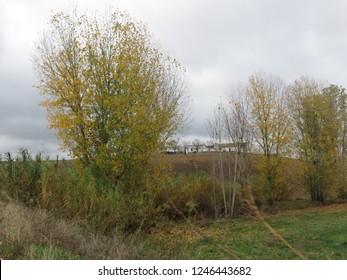 Florest nature landscape