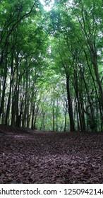 Florest Trail Nature
