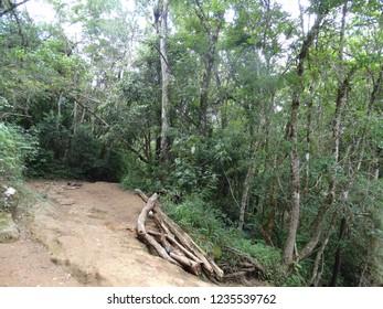 florest wild hill