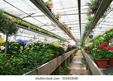 floriculture greenhouses