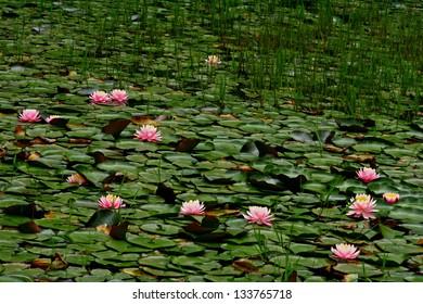 Florid Lake