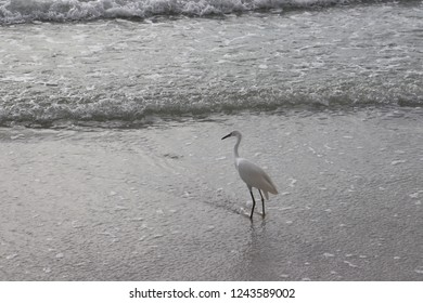 Florida beach birds