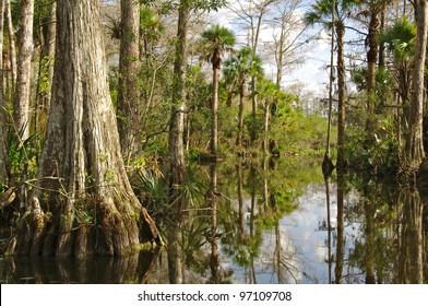 Florida Everglades