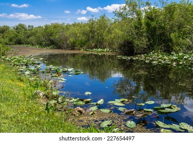 Florida Everglades View at Shark Valley showing Canal and Lily Pads