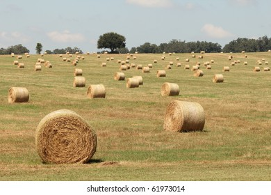Florida Farm Field with Hay Bales