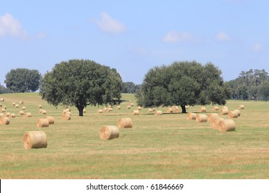 Florida Field with Hay Bales