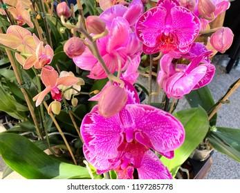 Florida Flower Garden