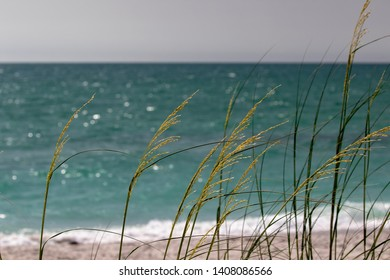 Florida Gulf of Mexico Beach and Dunes