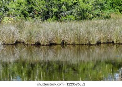 Florida marshland background reflections