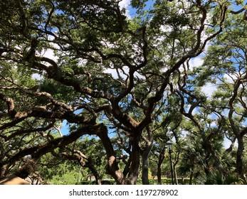 Florida Palmetto Tree Background