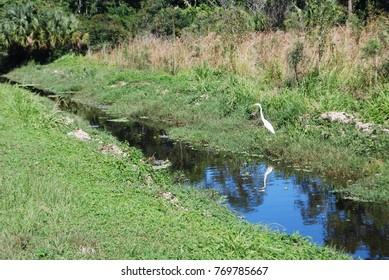 Florida park scenics