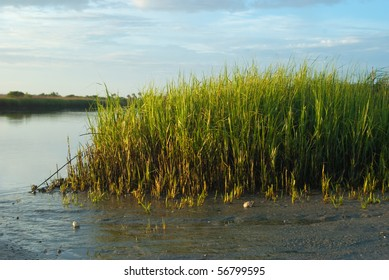 Florida saltwater marsh exposed by low tide.