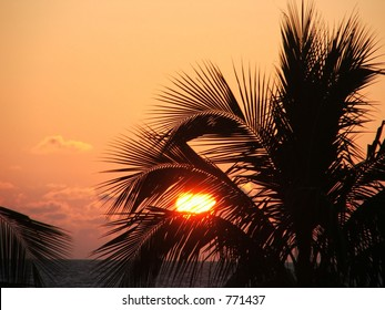 Florida Trees and Sunset