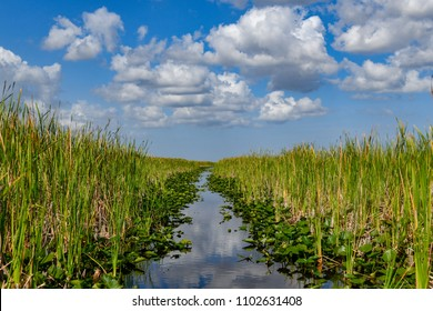 Florida wetland in the Everglades National Park in USA. Popular place for tourists, wild nature and animals.