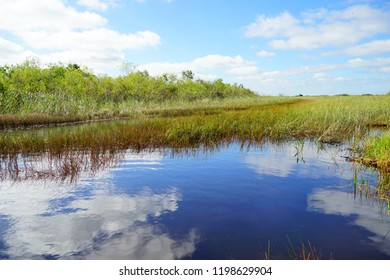 Florida wetland. Everglades National Park in Florida state, USA.