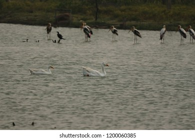 Florida's Wading Birds in lake water in India