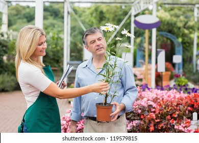Florist helping the customer while deciding on daisy plant
