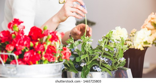 Flower Class Images, Stock Photos & Vectors | Shutterstock