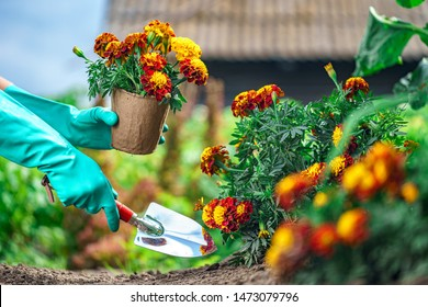 Florist plants flowers in the home garden. Gardening and floriculture