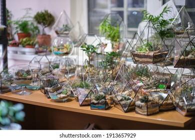 florist webinar on making of florarium with stones and succulents. Modern organic interior decor.