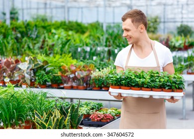 Florist at work. Handsome smiling professional is carrying multiple small flowerpots containing plants.